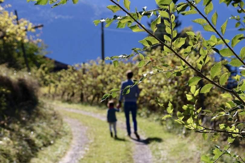 Autunno in Alto Adige: passeggiata tra i vigneti e Törggelen