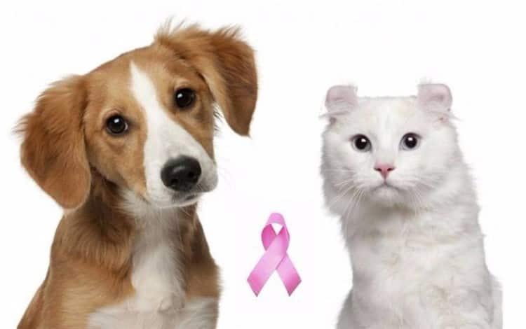 perra y gata rosa