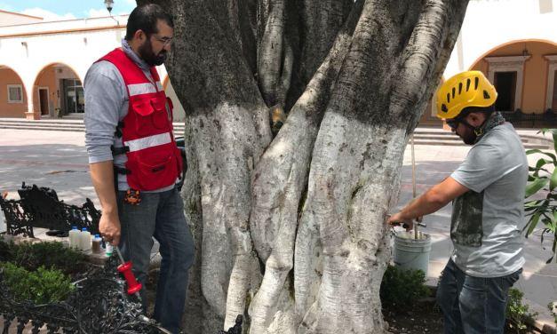 Buscan preservar árboles del jardín de Purísima