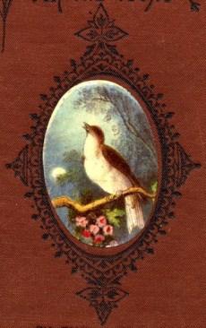 bird-images-48