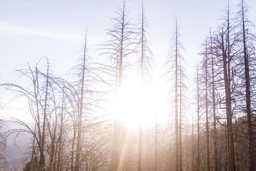 yosemite-national-park-california-u-s-holiday-8