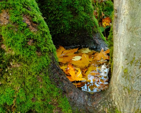 multnomah-falls-oregon-3