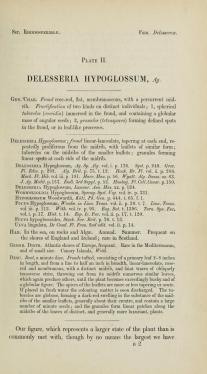 Plate 2, description