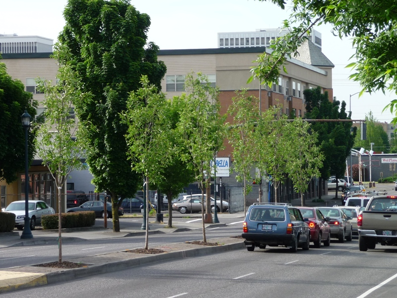 MLK Median Trees Replanted