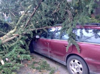 Tree on Car on Fremont. courtesy @conradjwilson