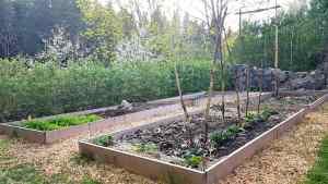 Trädgårdsland med bondbönor, spenat och ruccola.