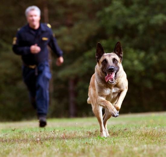 Hundpatrull Foto: Polisen