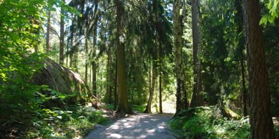 Årstaskogen i södra Stockholm - platsen för ett mord Foto: stockholm.se