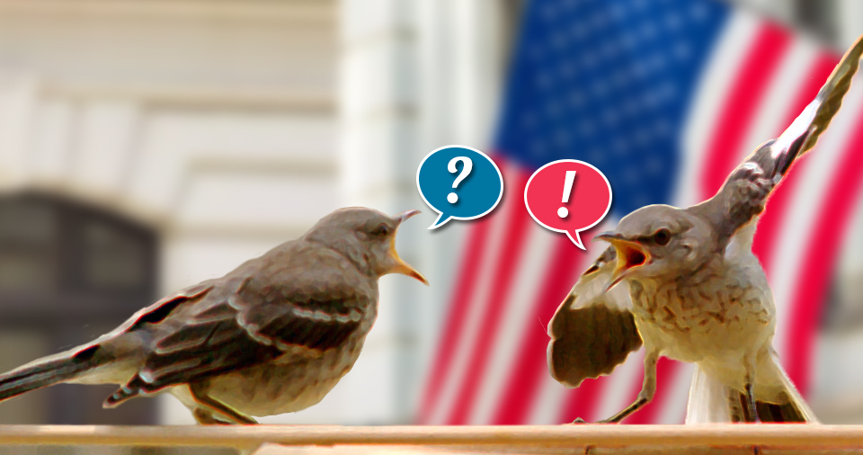 Birds arguing: Questions for Republicans. Dear Republicans: Your cruel and reckless policies are terrifying millions of your fellow Americans, and I'm trying to understand how you're okay with this.