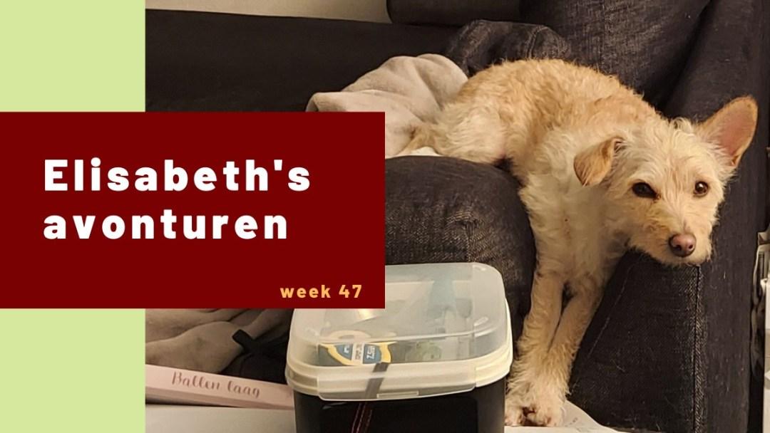Elisabeth's avonturen week 47 – 2020