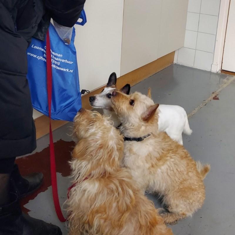 3 hondjes bij elkaar in zeeland
