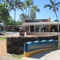 Beach Chairs On Sale Best Chair Reviews Waikiki Aquarium   Eliteconciergehawaii