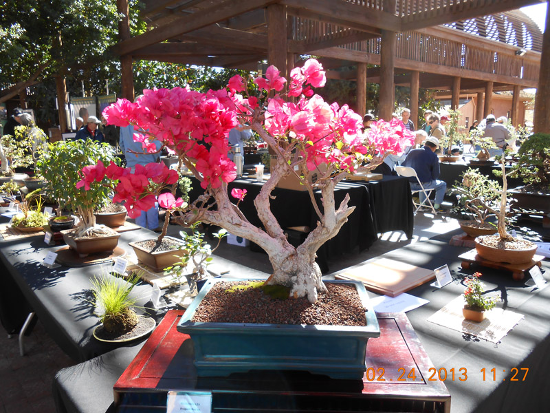 Pink Bonsai Tree Prize