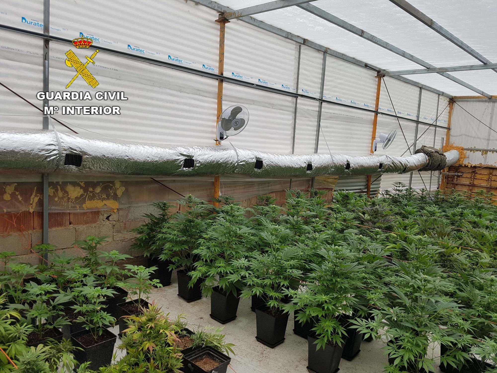 Detenido por dos cultivos de marihuana en invernaderos