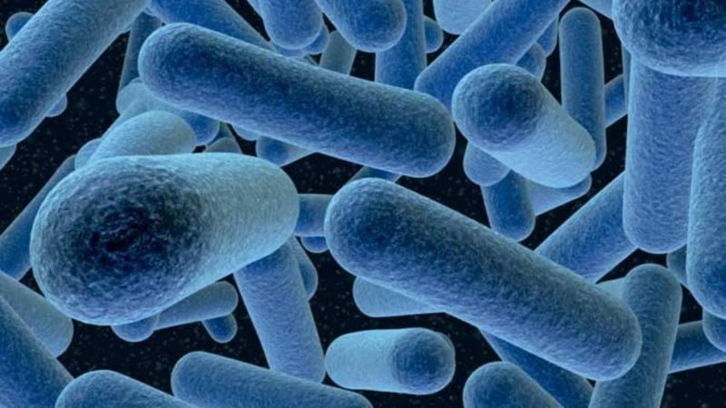 Crisis sanitaria de la Listeriosis. ¿Quienes son los responsables?