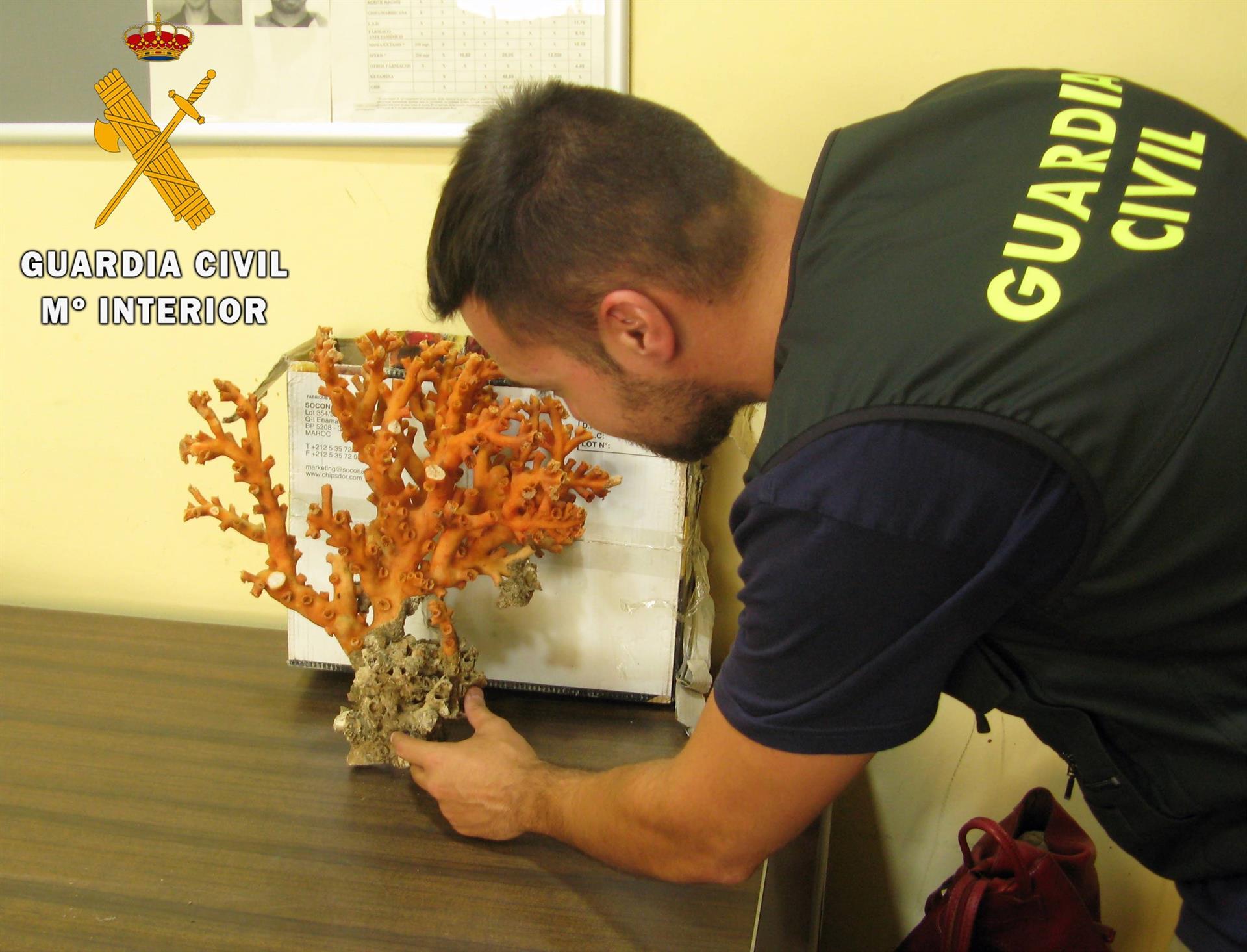Intervenida en el puerto una pieza de coral rojo protegido de dos kilos de peso oculta en un vehículo
