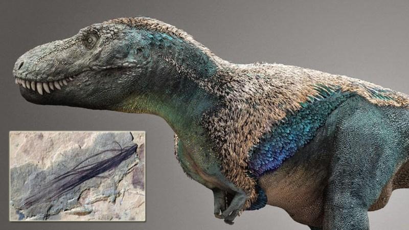 Encuentran plumas fosilizadas de dinosaurios de hace 118 millones de años