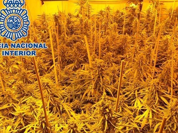 Absuelto el dueño de una plantación de marihuana por entrada sin consentimiento