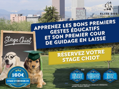 stage chiot