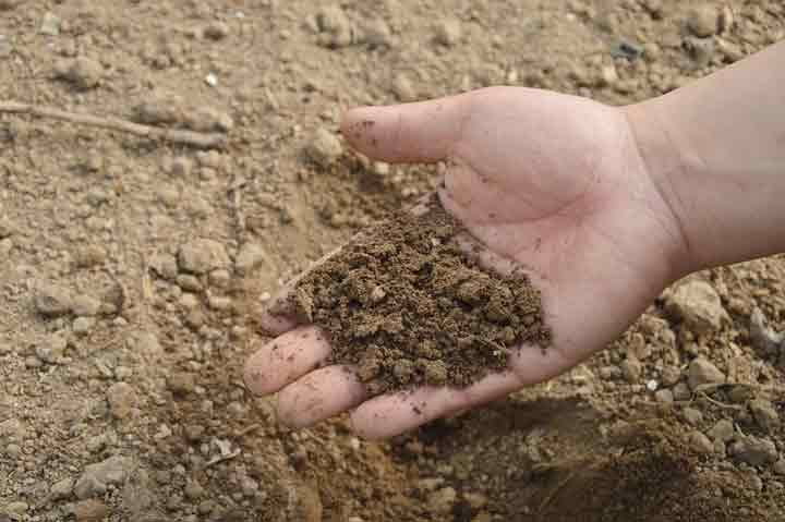 How to Attract Deer Fertile Soil