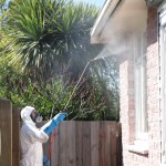 Christchurch Pest Control and Exterminators Elite Pest Control 1