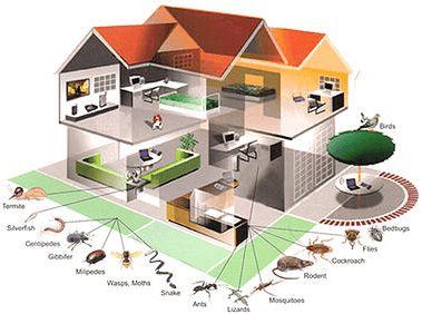 House & Pest Diagram - Pest Control