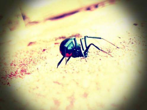 black-widow-spider-2