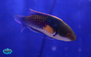 fishwall1