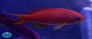 fishwall14