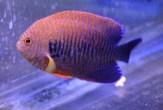 fishwall5