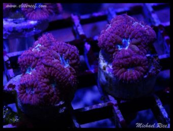 elite_reef_frags_DSC1128