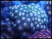 coral_denver_frag_dsc2407