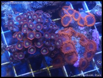 coral_denver_frag_dsc2411