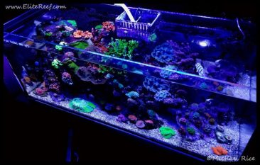 reef_aquarium_elite_reef2016-11-18-20-12-25