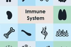 immune system tips