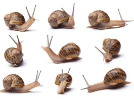 eating snails health benefits