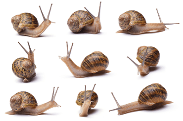 eating snails health benefits