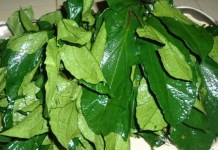 Health Benefits of Ugu leaves