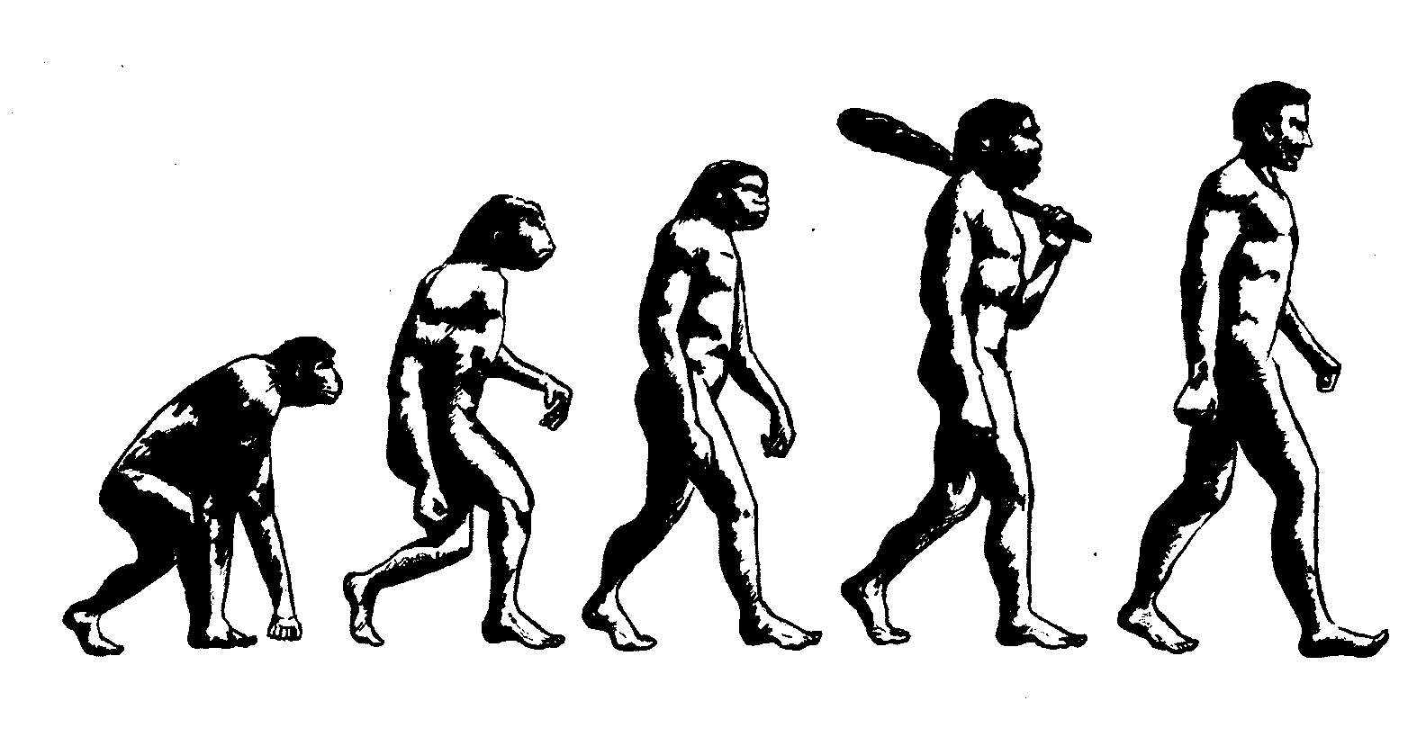 Evolution of Strength Training