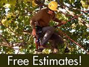 Free Estimates - Tree Care Services