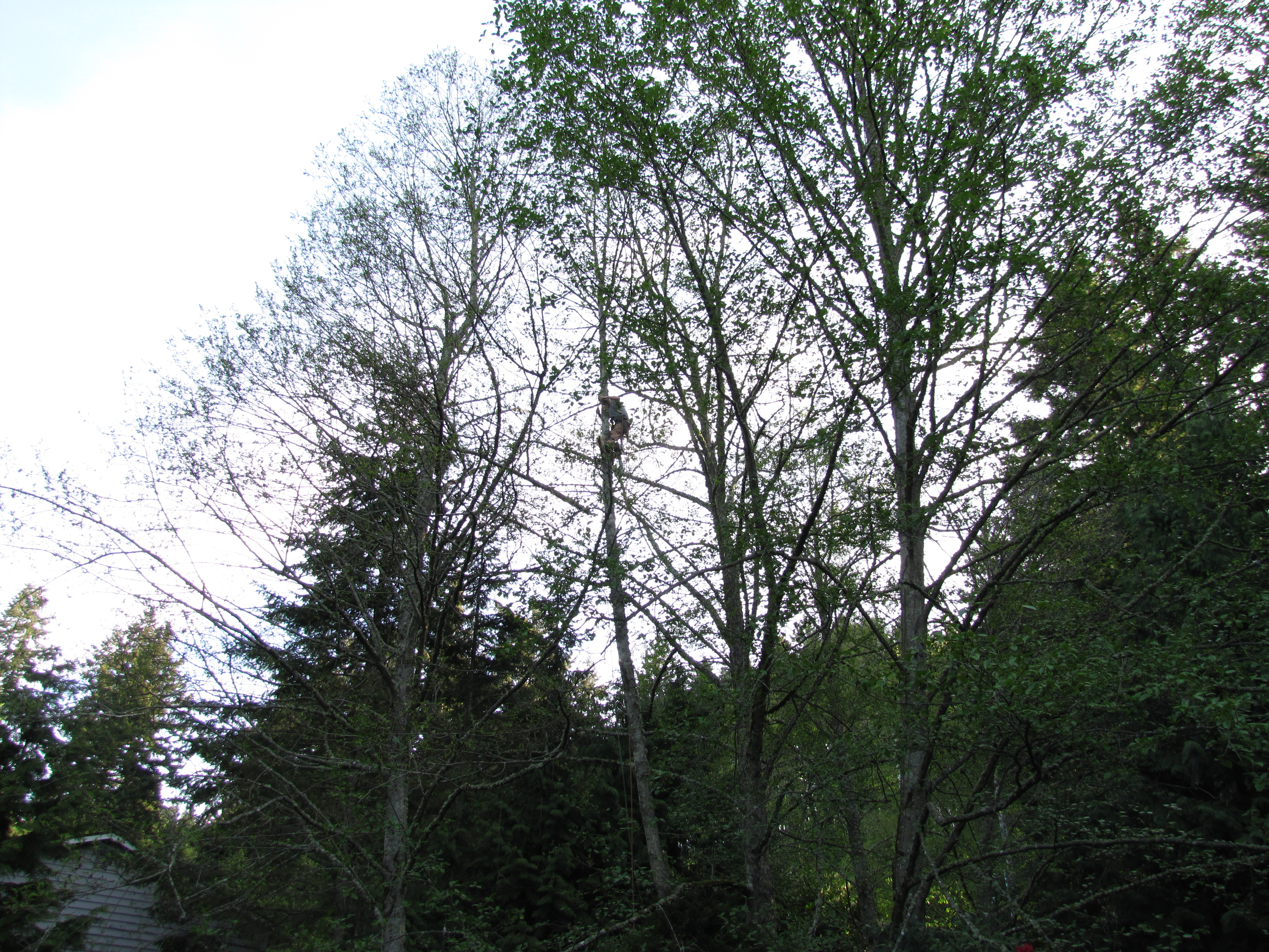 Tree Care Seattle