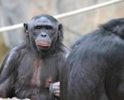 Det er ikke i orden at vi mennesker tester på dyr, om vores kosmetik er skadeligt eller ej. Vi kæmper for en verden af kosmetik uden test på dyr!