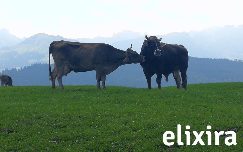 Emner som om sundhed og dyrevelfærd har optaget os de seneste år? Hvilke tiltag har madindustrien gjort for at imødekomme danskerne stigende bevidsthed?