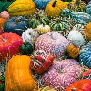 inner-garden-harvest-party