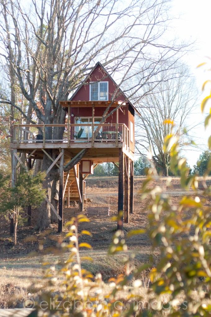 Treehouse Vineyards Matthews Charlotte Monroe NC-9