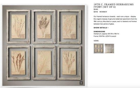 Herbarium Framed Ivory Gallery