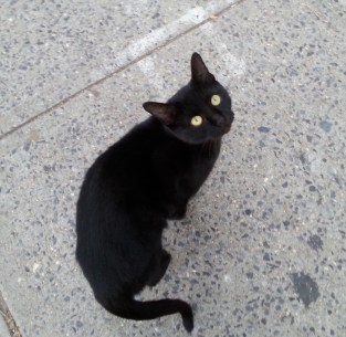 littleblackcat3