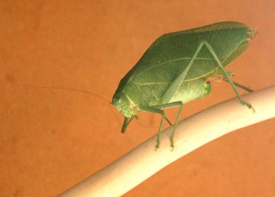 Grasshopper visit