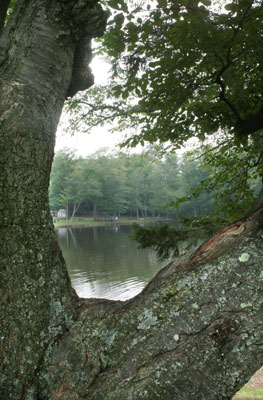 Lake View through branches