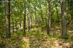 My boyfriend has a forest....